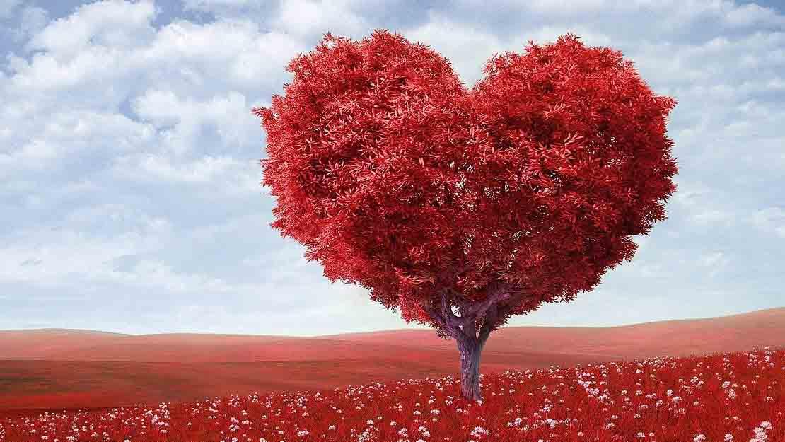 รักเกิดขึ้นที่สมองหรือหัวใจ และจุดกำเนิดสัญลักษณ์รูปหัวใจ